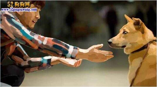 宠物狗遭遗弃成流浪狗谁来管