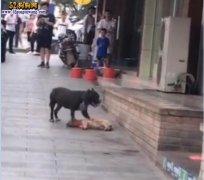 比特犬当街疯狂撕咬宠物狗致死!