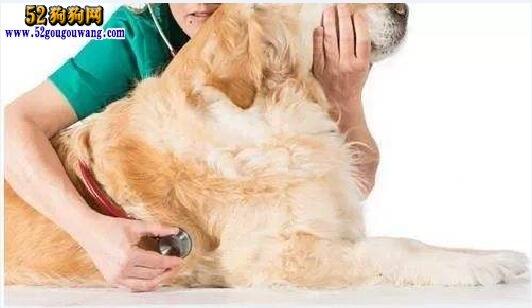 狗吐白沫是怎么回事