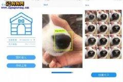 中国人工智能技术用于宠物狗!利