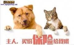 杭州有创业公司盯上宠物保险市场