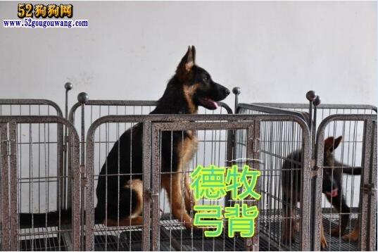 德国牧羊犬吧