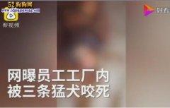 广州一电工被3条罗威纳犬袭击身
