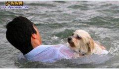 最有爱心狗主人!狗主人跳入臭水