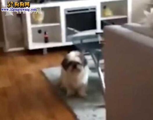 美国女大学生将宠物狗放烘干机里5分钟