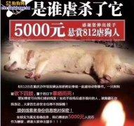 重庆狗狗被砍四肢暴晒而死!爱狗