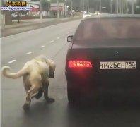 虐狗!俄罗斯一宠物狗被主人栓在