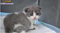 我国第一只克隆猫诞生!未来花38