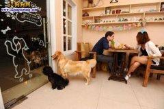 顾客带宠物狗进餐馆!其他顾客反