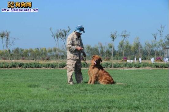 狗狗应该怎么训练