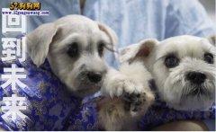 人民日报发声:38万克隆宠物狗且