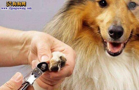 宠物美容教程