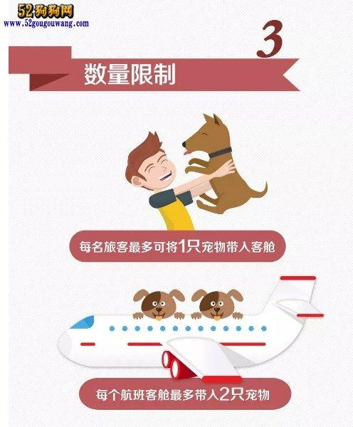 """国内即将开通一起带狗狗做飞机业务!看看""""铲屎官""""们的反应!"""