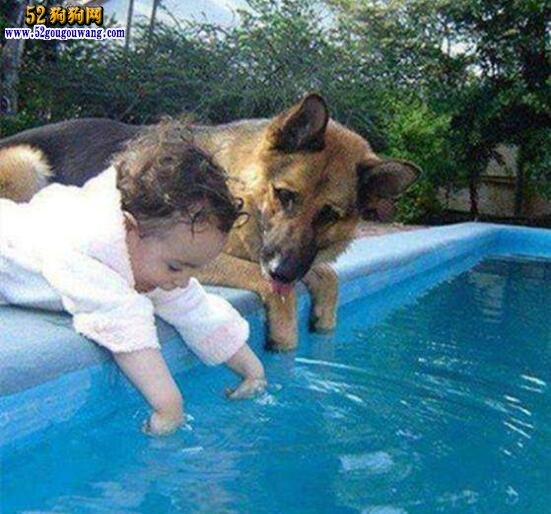 十大忠诚的狗排名
