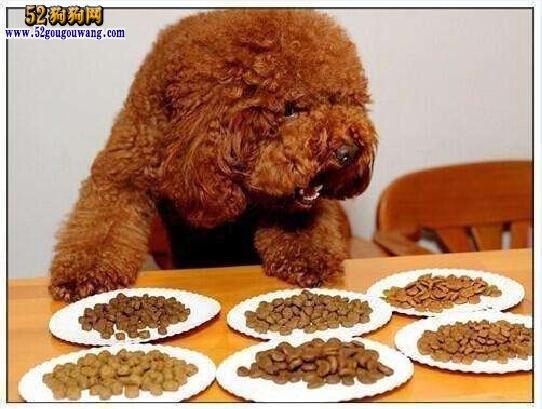 泰迪犬怎样训练
