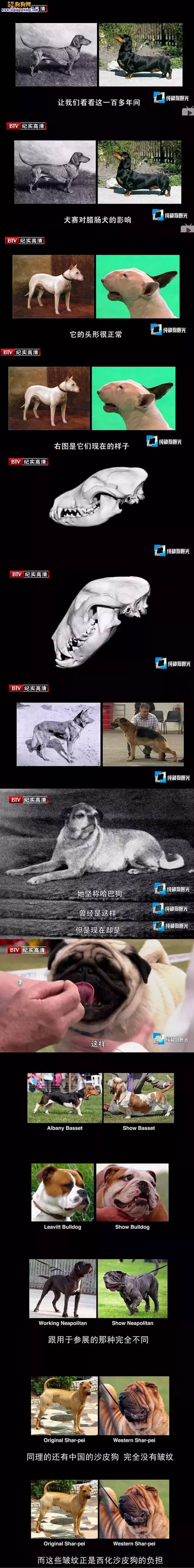 人类对宠物狗最为残忍!