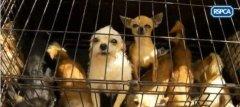 英国女子非法饲养100多只狗狗被