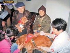 人和小动物接触会减轻精神压力!