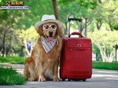 国庆出游带狗狗,要注意哪些地方