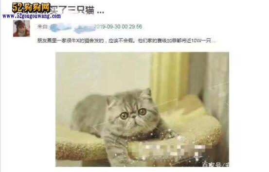 范冰冰被爆抛弃宠物狗法国斗牛犬!又养起了十几万的宠物猫!