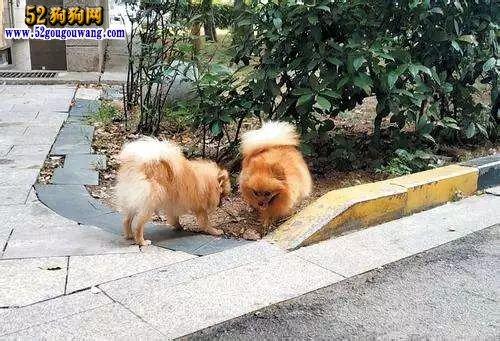 南京年养狗纠纷近万起! 违规养犬和个人诚信挂钩问卷支持率高!