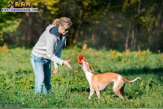 训狗方法、16个训狗口令和手势图解