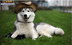 狗狗壁纸图片大全欣赏