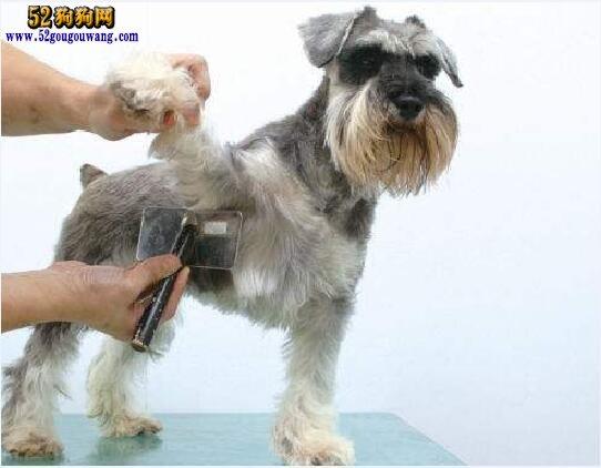 狗狗美容图片、狗狗美容造型图片大全欣赏
