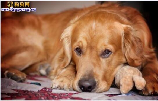 什么狗狗最好养
