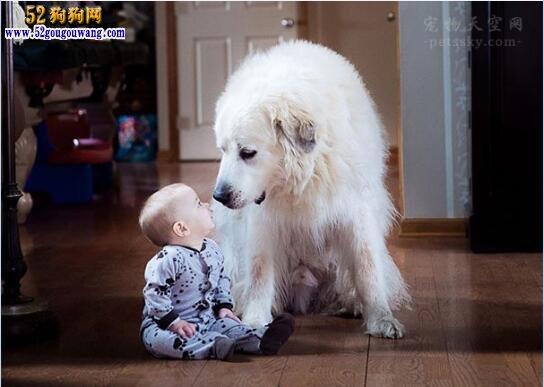 怎么养狗、第一次养狗日常需要注意什么?