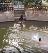 忠犬!主人假装溺水、狗狗立刻跳