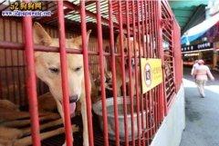 韩国首尔全面停止屠狗!美国女星