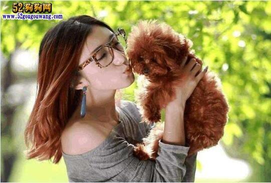 贵宾犬怎么养?养贵宾犬的注意事项有哪些?