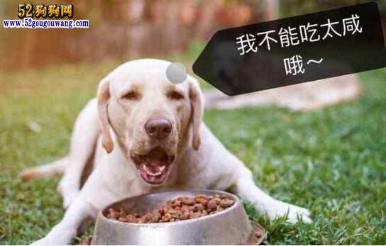 拉布拉多吃什么?拉布拉多狗粮的问题?
