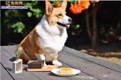 狗狗皮肤有肿块怎么办?