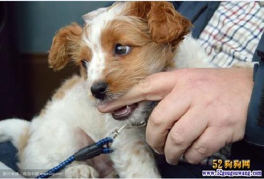 养狗狗的注意事项?狗的饲养注意事项都有哪些?
