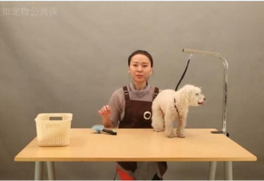 狗狗视频教程-狗狗美容学习必看的教程