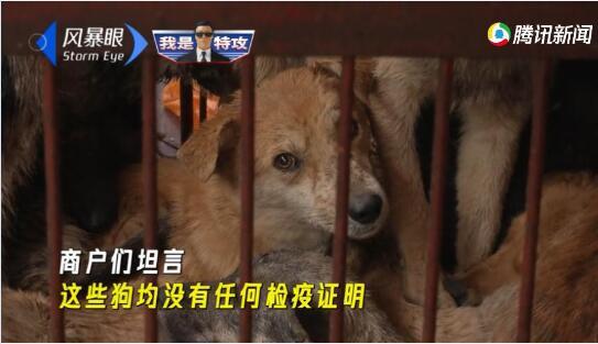 【视频】宠物狗遭诱拐宰
