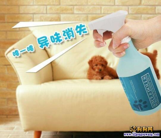 家里养狗怎么除味?如何消毒?
