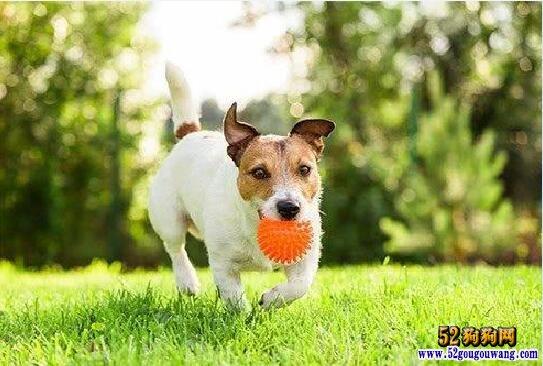 跟狗狗玩球互动也需要技巧?如何才能和狗狗玩得开心和安全!