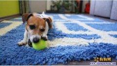 跟狗狗玩球互动也需要技