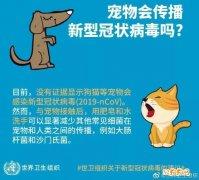 疫情当前更不能抛弃猫猫