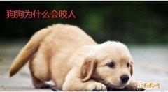狗狗问答:狗狗为什么会