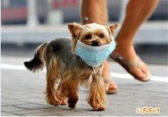 宠物狗会感染新型冠状病