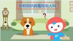小狗冠状病毒传染人吗?
