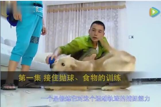 教狗狗的视频教程、训练狗狗握手装死-动作科目要点!