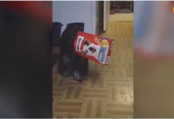 狗狗爆笑视频,爆笑狗狗视频合集!