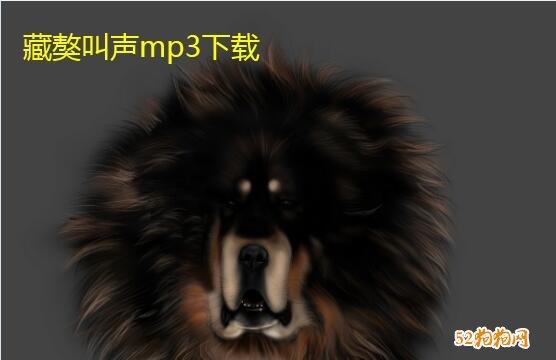 藏獒叫声、藏獒叫声mp3大全无杂音下载!