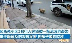 临沂一小区出现1米大狗疯狂咬人还流口水被捕杀!