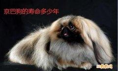 京巴狗能活多少年?来看看京巴狗的寿命!